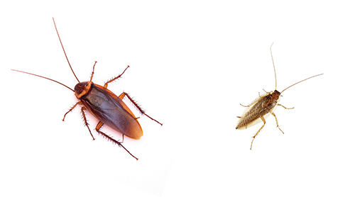 image of roaches